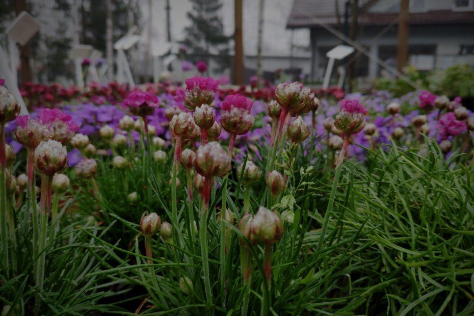 tło - rośliny